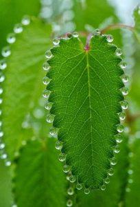 wonderful-nature-photos (11)