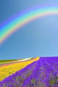 wonderful-nature-photos (13)