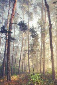 wonderful-nature-photos (21)