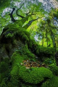 wonderful-nature-photos (22)