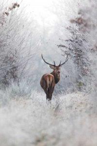wonderful-nature-photos (24)
