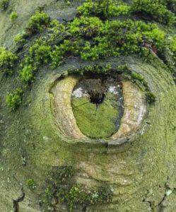 wonderful-nature-photos (9)