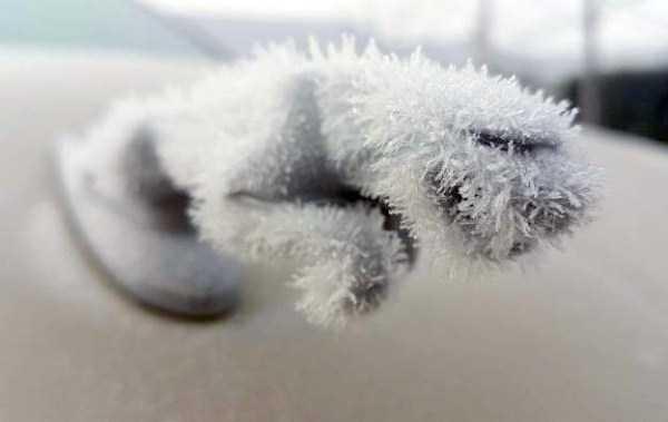 frozen-cars (26)