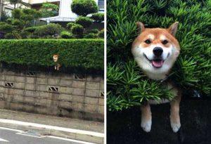 funny-dog-fails (11)