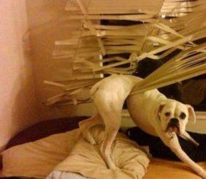 funny-dog-fails (21)