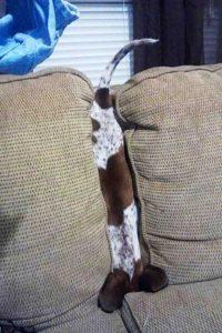 funny-dog-fails (26)