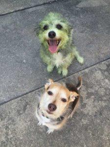 funny-dog-fails (3)