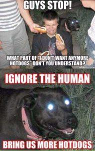 funny-pics-memes (14)