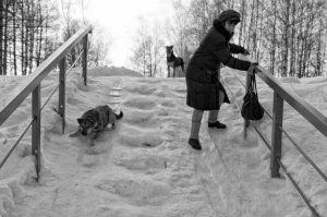 russian-winter-funny-pics (27)