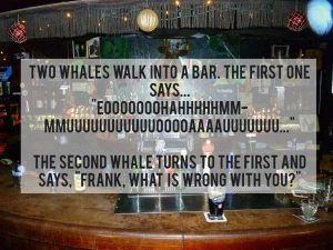 terrible-jokes (4)