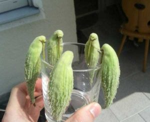 unusual-shaped-fruits-vegetables (32)