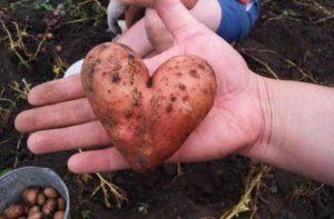 unusual-shaped-fruits-vegetables (33)