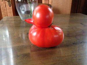 unusual-shaped-fruits-vegetables (47)