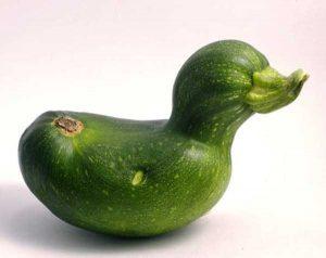 unusual-shaped-fruits-vegetables (50)