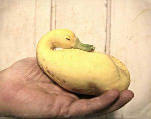 unusual-shaped-fruits-vegetables (51)