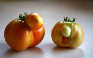 unusual-shaped-fruits-vegetables (59)