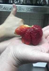 unusual-shaped-fruits-vegetables (60)
