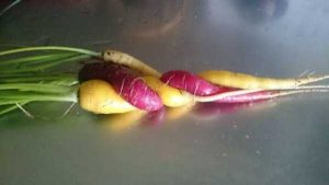 unusual-shaped-fruits-vegetables (8)