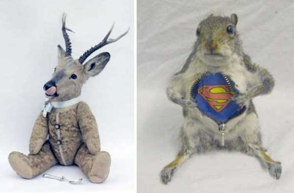 funny-taxidermy-fails (6)