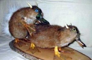 funny-taxidermy-fails (9)