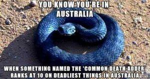 australia-funny-pics (10)