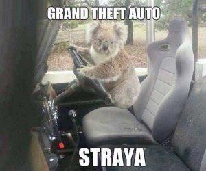 australia-funny-pics (23)