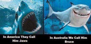 australia-funny-pics (8)