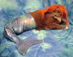 funny-mermaids-pics (16)