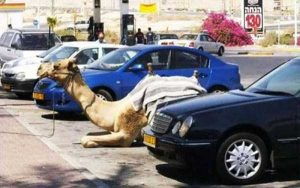 funny-pics-from-israel (2)