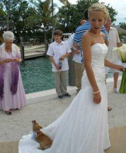 funny-wedding-pics (10)