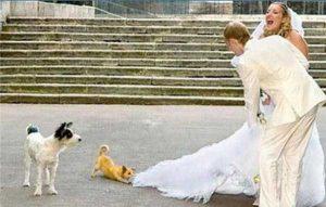 funny-wedding-pics (23)