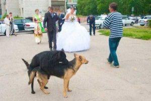 funny-wedding-pics (5)