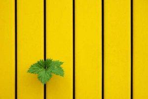 minimalist-photos (24)