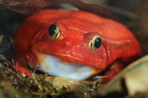 red-animals (11)