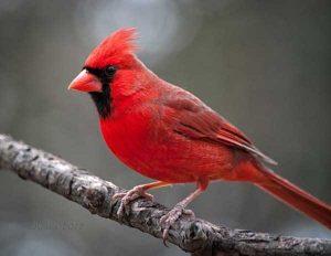 red-animals (13)