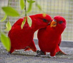 red-animals (16)