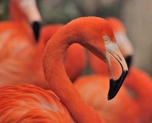 red-animals (19)