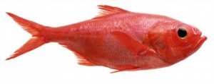 red-animals (2)