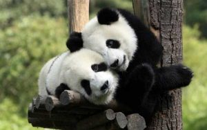 cute-animal-couples (11)