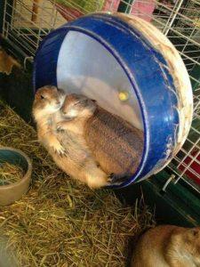 cute-animal-couples (13)