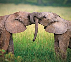 cute-animal-couples (14)