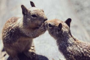cute-animal-couples (18)