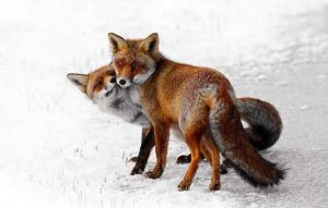 cute-animal-couples (2)