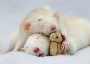 cute-animal-couples (24)
