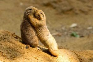 cute-animal-couples (25)