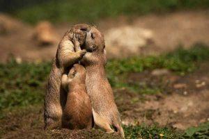 cute-animal-couples (27)