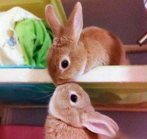 cute-animal-couples (5)