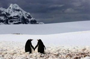 cute-animal-couples (6)
