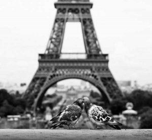 cute-animal-couples (9)