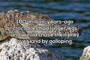 gross-facts (9)